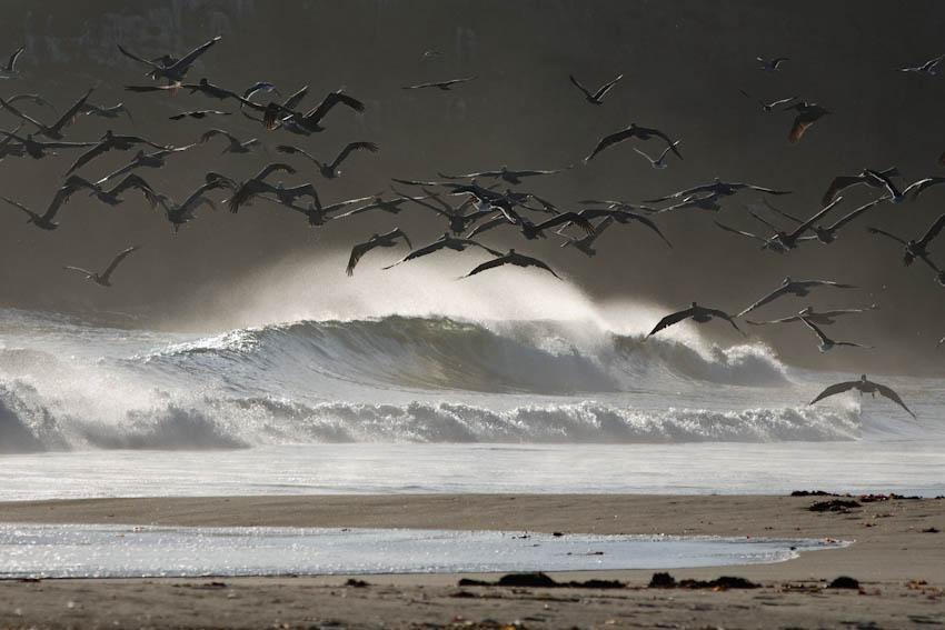 Pelicans of Año